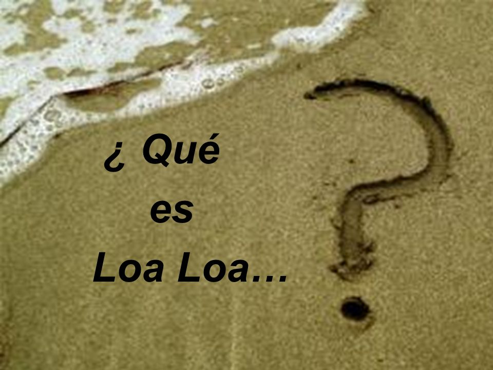 ¿Qué es LOA LOA … ¿ Qué es Loa Loa…