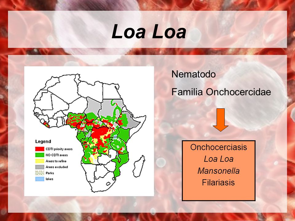 Loa Loa Nematodo Familia Onchocercidae Onchocerciasis Loa Loa
