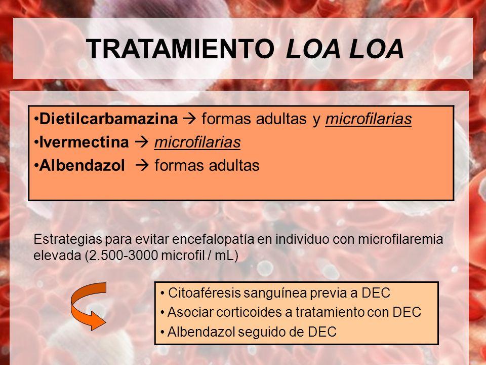 TRATAMIENTO LOA LOA Dietilcarbamazina  formas adultas y microfilarias