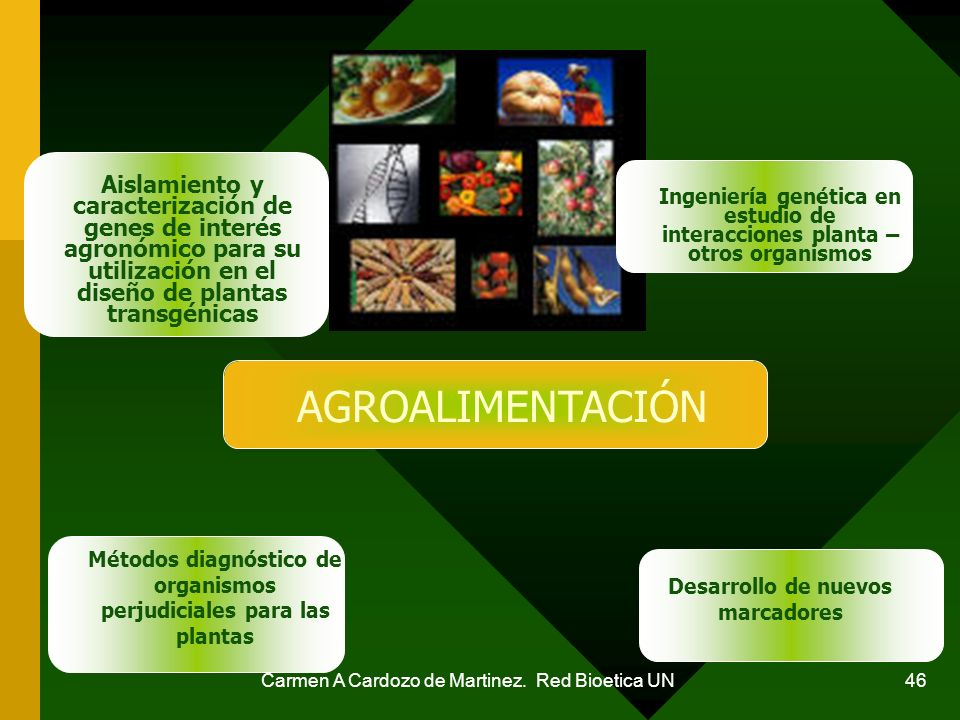 Aislamiento y caracterización de genes de interés agronómico para su utilización en el diseño de plantas transgénicas