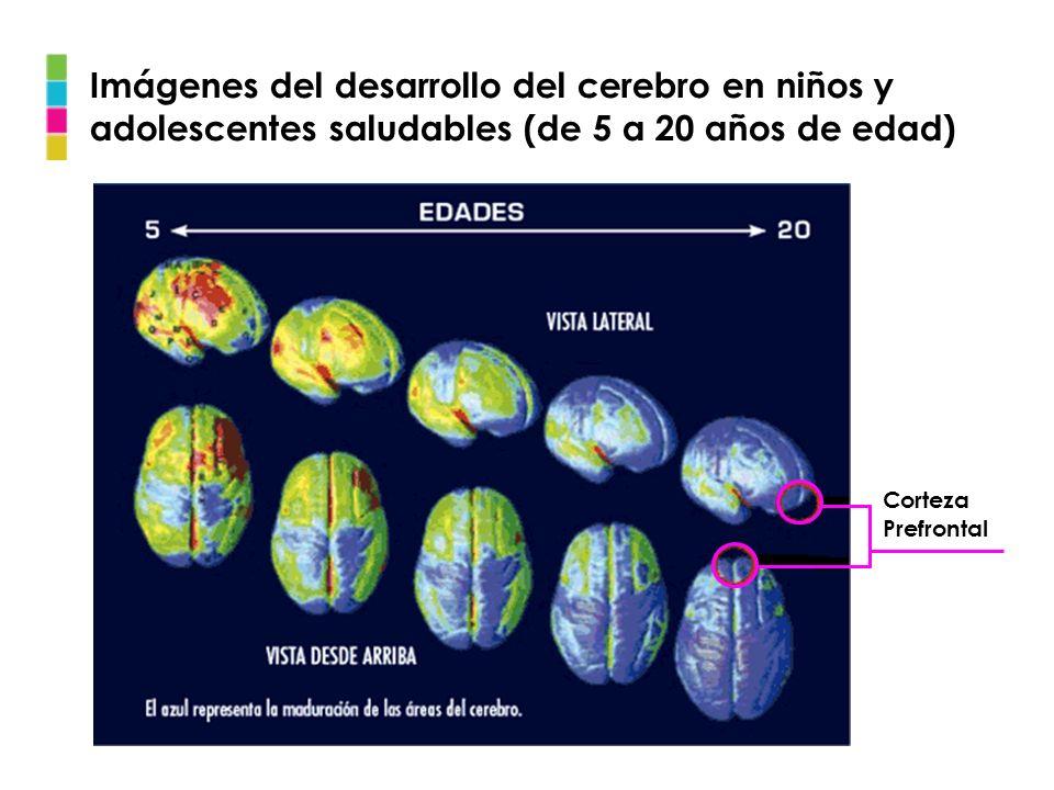 Imágenes del desarrollo del cerebro en niños y adolescentes saludables (de 5 a 20 años de edad)
