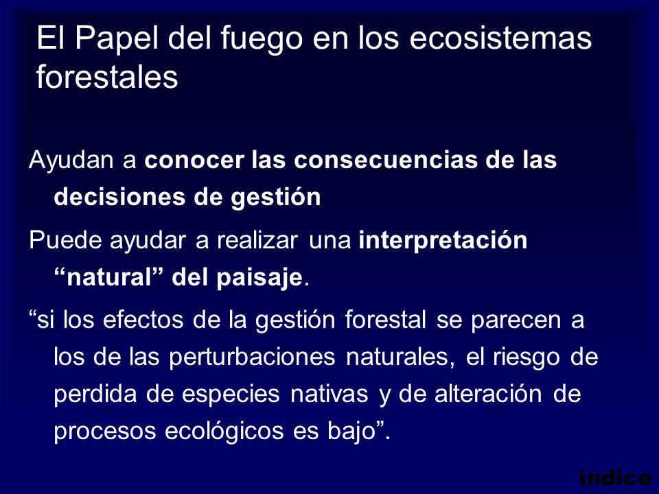 El Papel del fuego en los ecosistemas forestales
