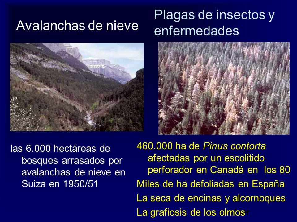 Plagas de insectos y enfermedades