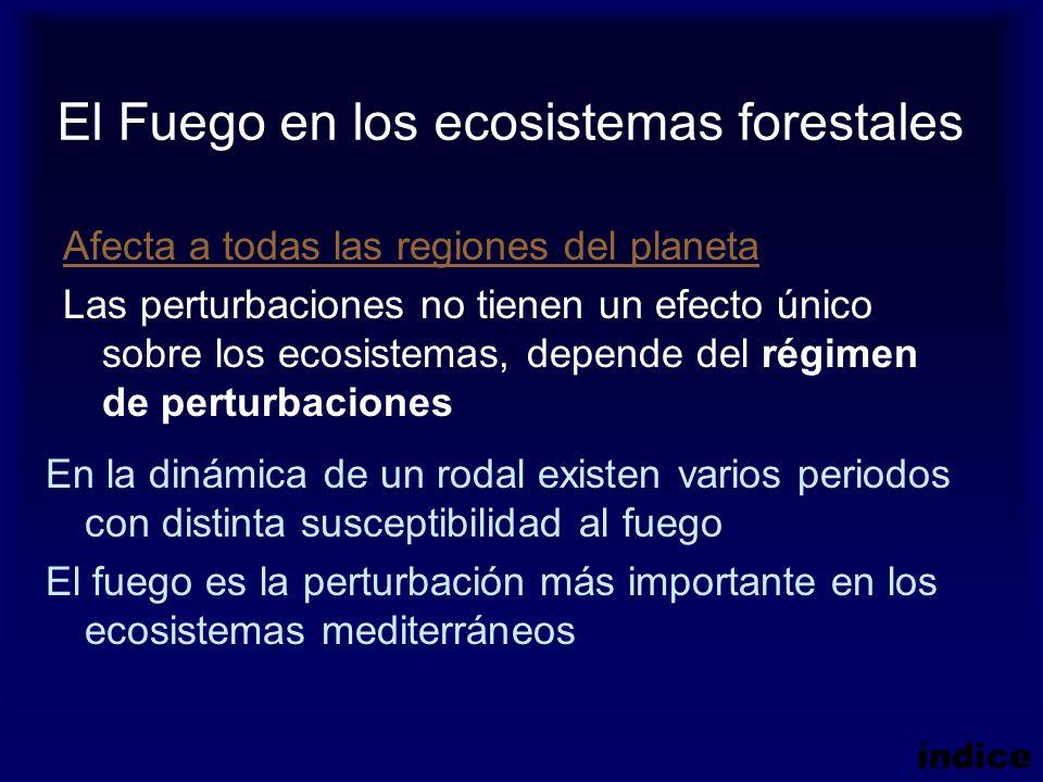 El Fuego en los ecosistemas forestales