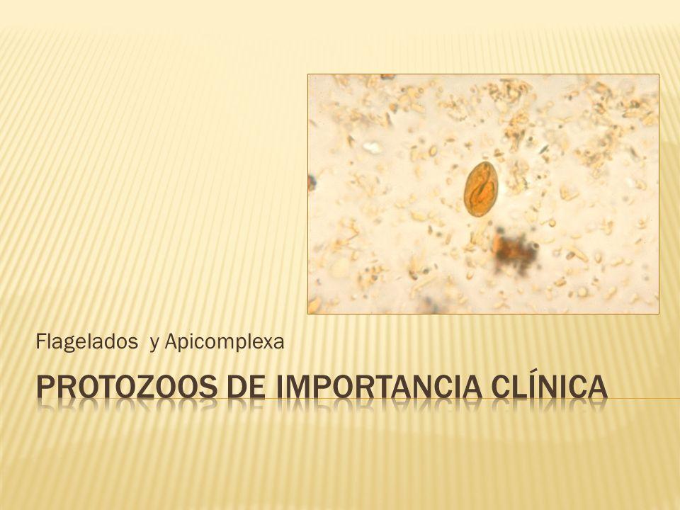 Protozoos de importancia clínica