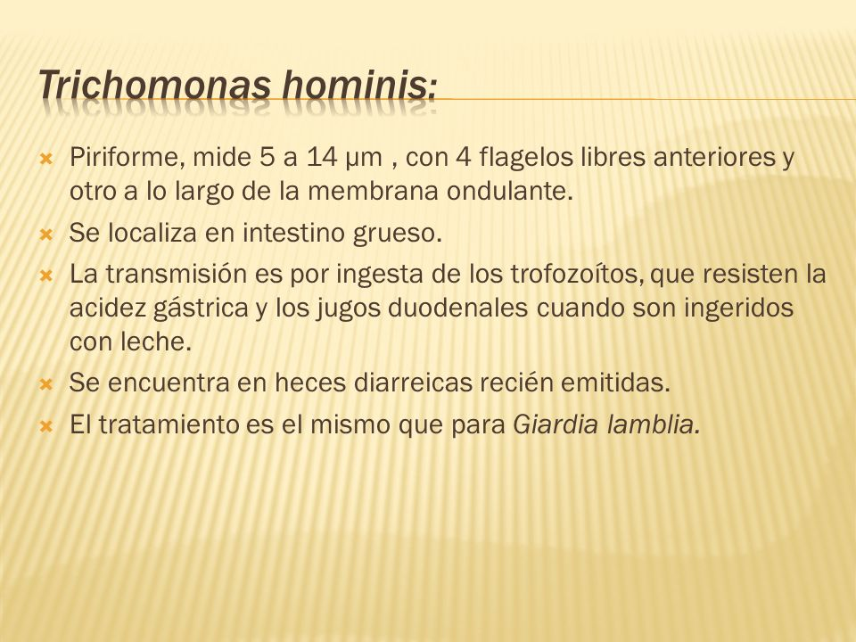 Trichomonas hominis: Piriforme, mide 5 a 14 µm , con 4 flagelos libres anteriores y otro a lo largo de la membrana ondulante.