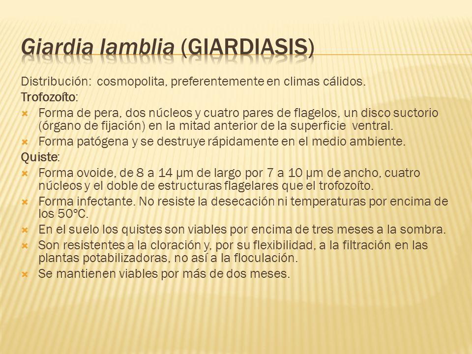 Giardia lamblia (giardiasis)