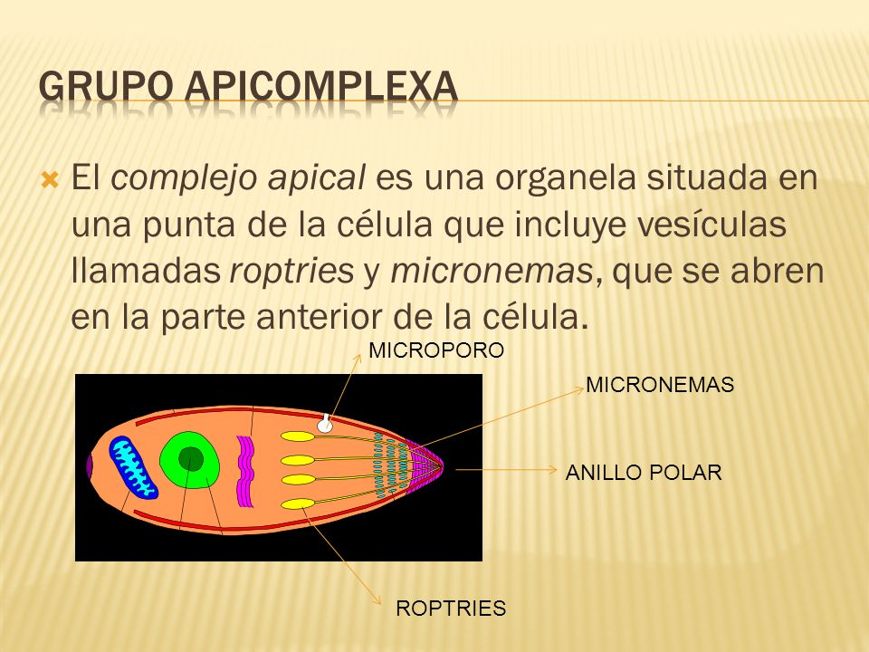 GRUPO APICOMPLEXA