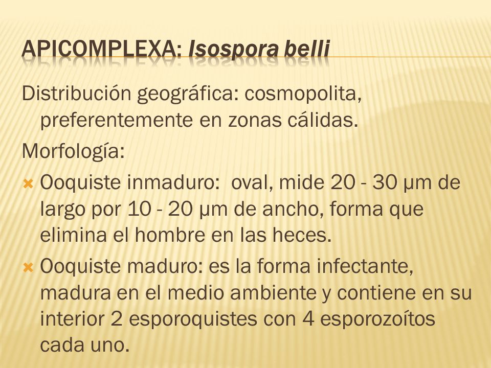 Apicomplexa: Isospora belli