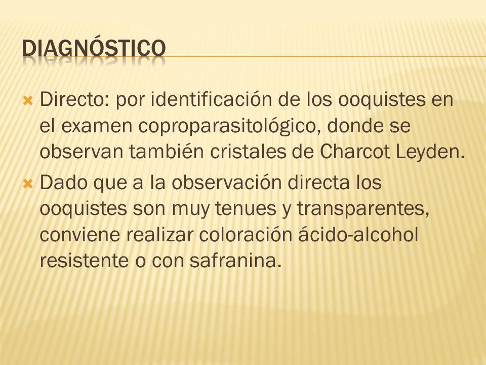 Diagnóstico Directo: por identificación de los ooquistes en el examen coproparasitológico, donde se observan también cristales de Charcot Leyden.