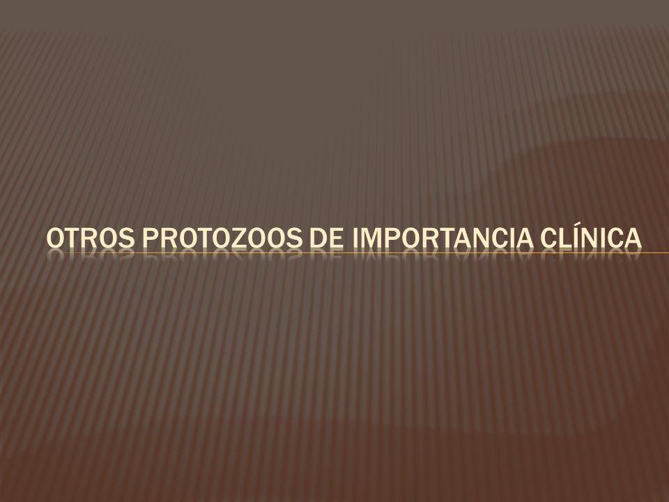 Otros protozoos de importancia clínica