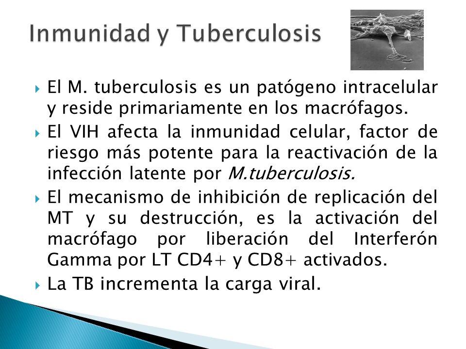 Inmunidad y Tuberculosis