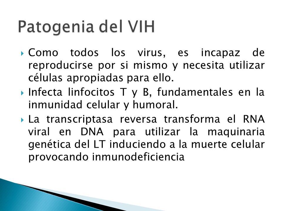 Patogenia del VIH Como todos los virus, es incapaz de reproducirse por si mismo y necesita utilizar células apropiadas para ello.