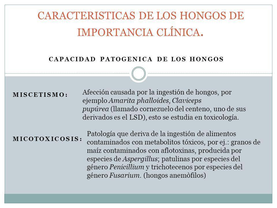 CARACTERISTICAS DE LOS HONGOS DE IMPORTANCIA CLÍNICA.