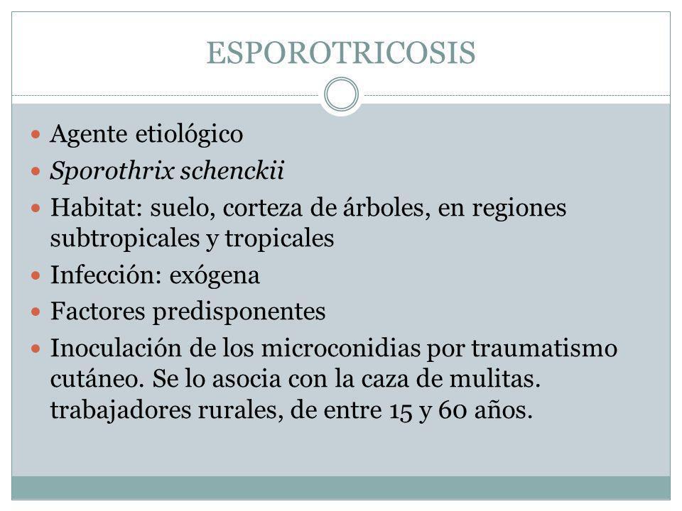 ESPOROTRICOSIS Agente etiológico Sporothrix schenckii