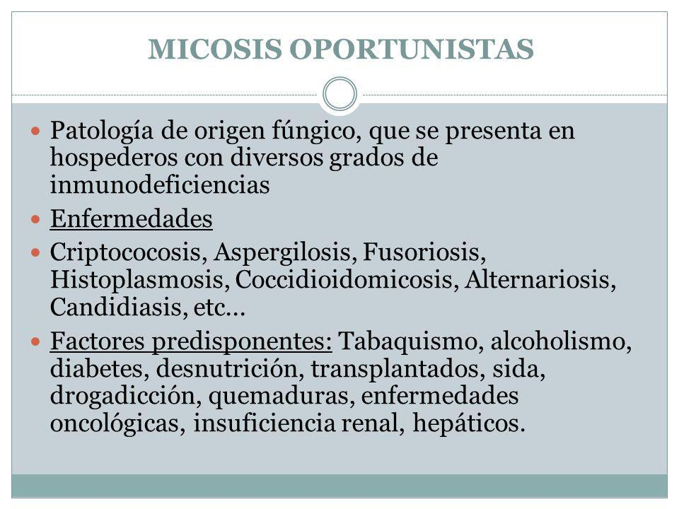 MICOSIS OPORTUNISTAS Patología de origen fúngico, que se presenta en hospederos con diversos grados de inmunodeficiencias.