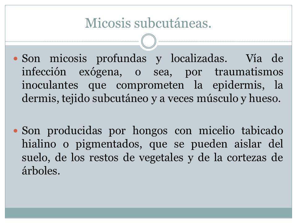 Micosis subcutáneas.