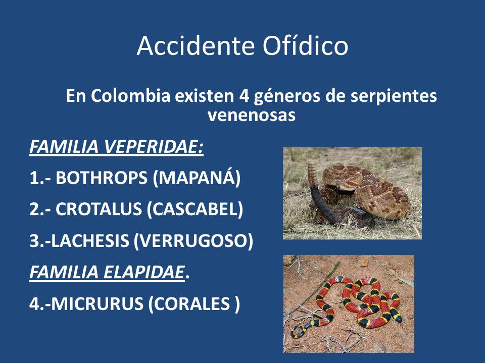 En Colombia existen 4 géneros de serpientes venenosas