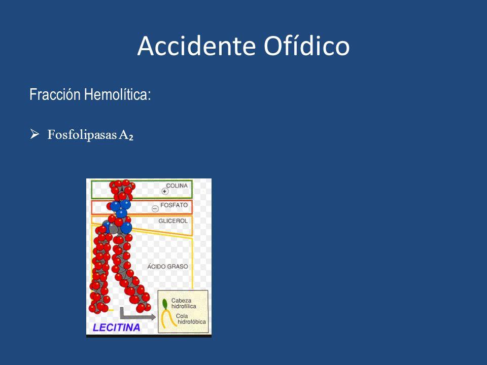 Accidente Ofídico Fracción Hemolítica: Fosfolipasas A₂