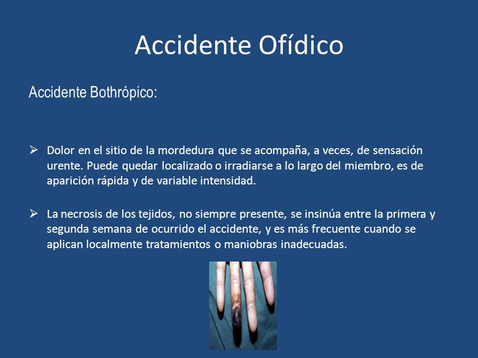 Accidente Ofídico Accidente Bothrópico:
