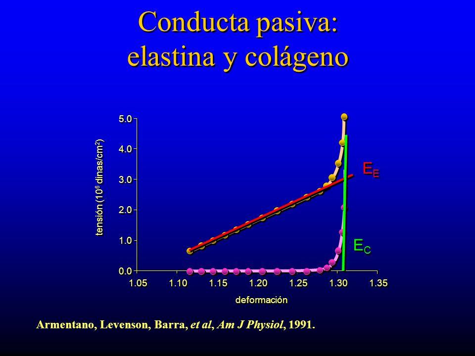 Conducta pasiva: elastina y colágeno