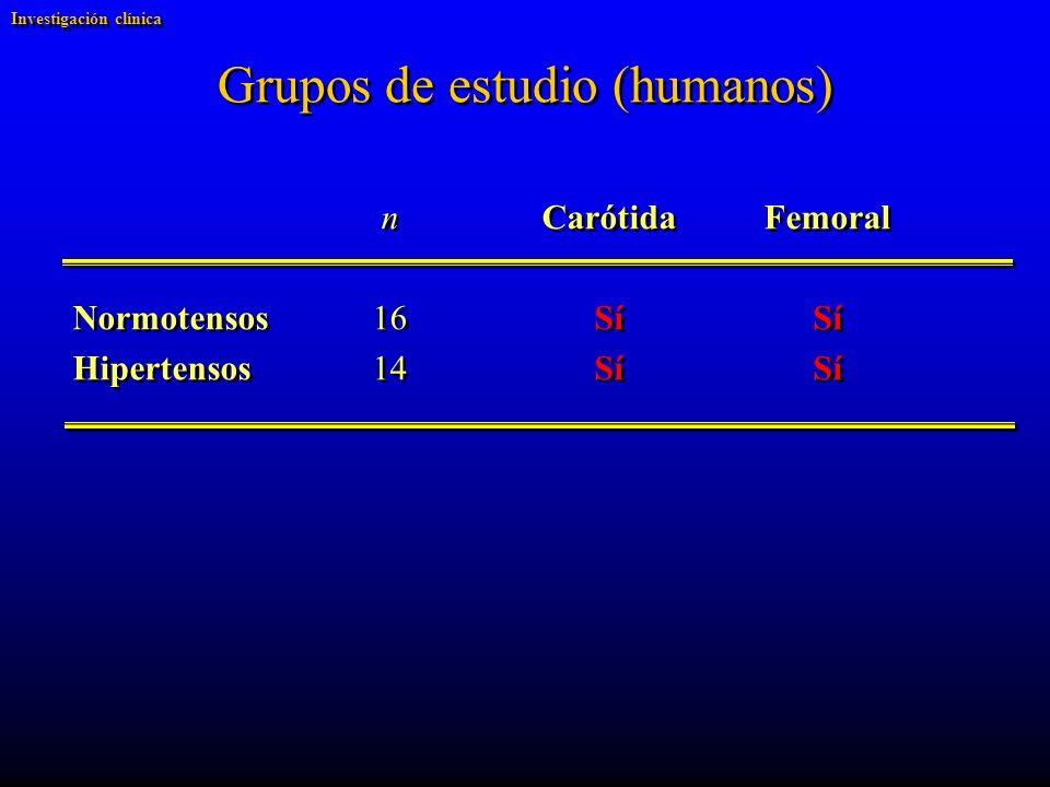 Grupos de estudio (humanos)