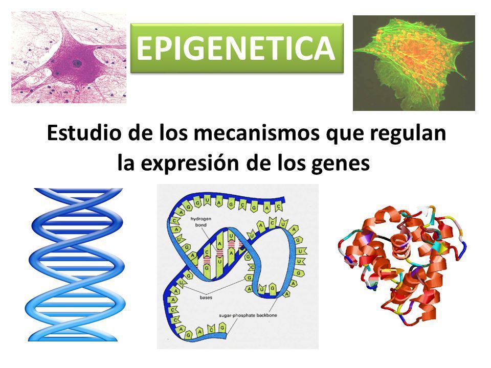 Estudio de los mecanismos que regulan la expresión de los genes