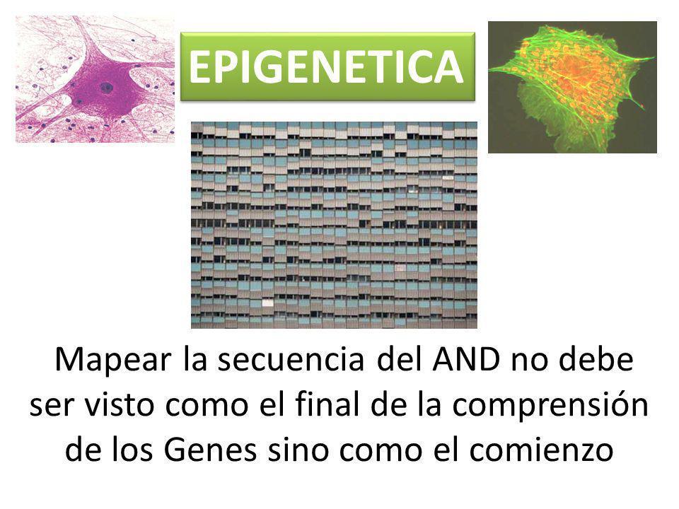 EPIGENETICA Mapear la secuencia del AND no debe ser visto como el final de la comprensión de los Genes sino como el comienzo.