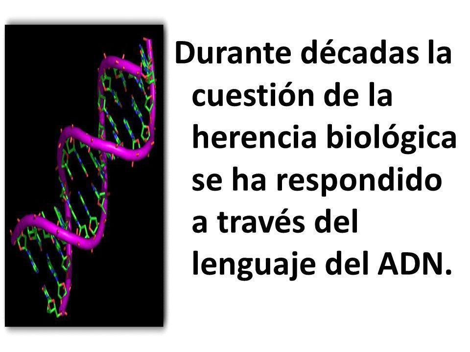 Durante décadas la cuestión de la herencia biológica se ha respondido a través del lenguaje del ADN.