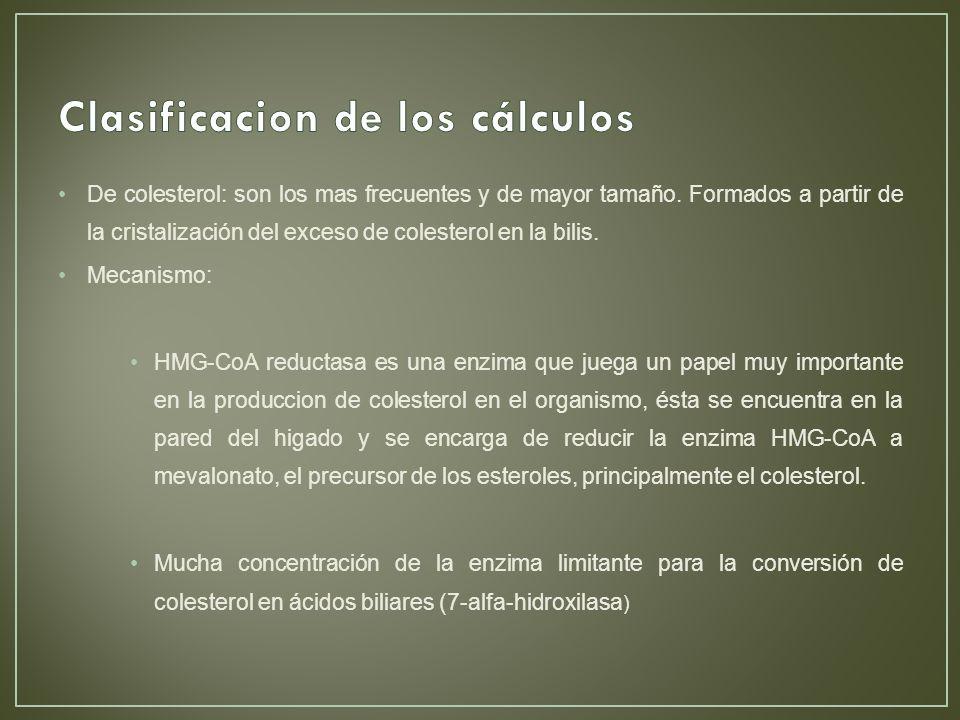 Clasificacion de los cálculos