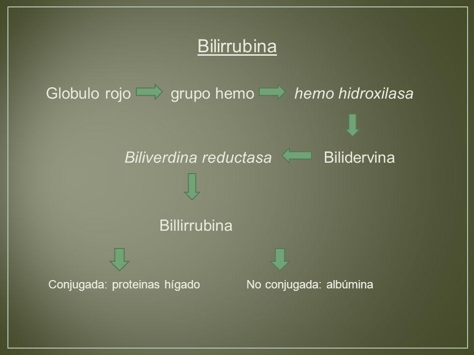 Bilirrubina Globulo rojo grupo hemo hemo hidroxilasa