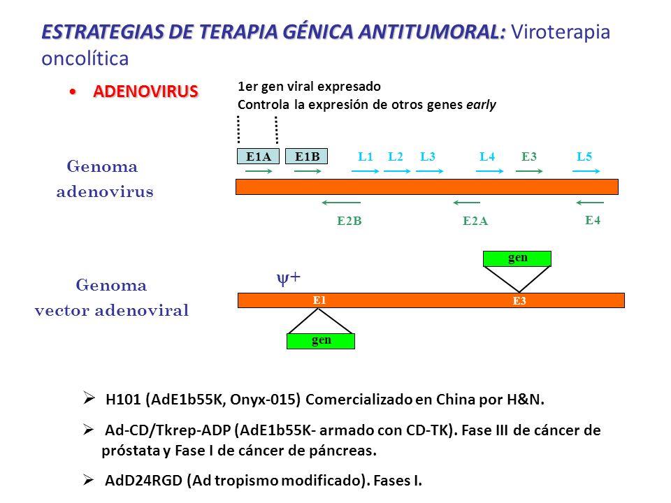 ESTRATEGIAS DE TERAPIA GÉNICA ANTITUMORAL: Viroterapia oncolítica