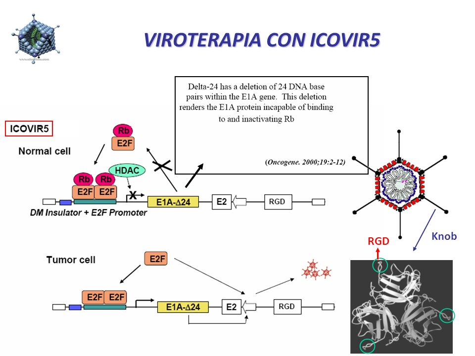 VIROTERAPIA CON ICOVIR5