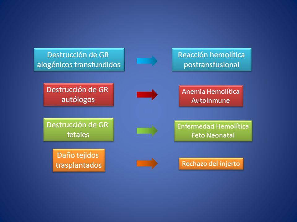 alogénicos transfundidos Reacción hemolítica postransfusional