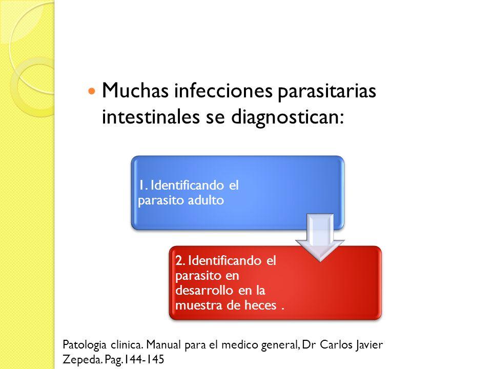 Muchas infecciones parasitarias intestinales se diagnostican: