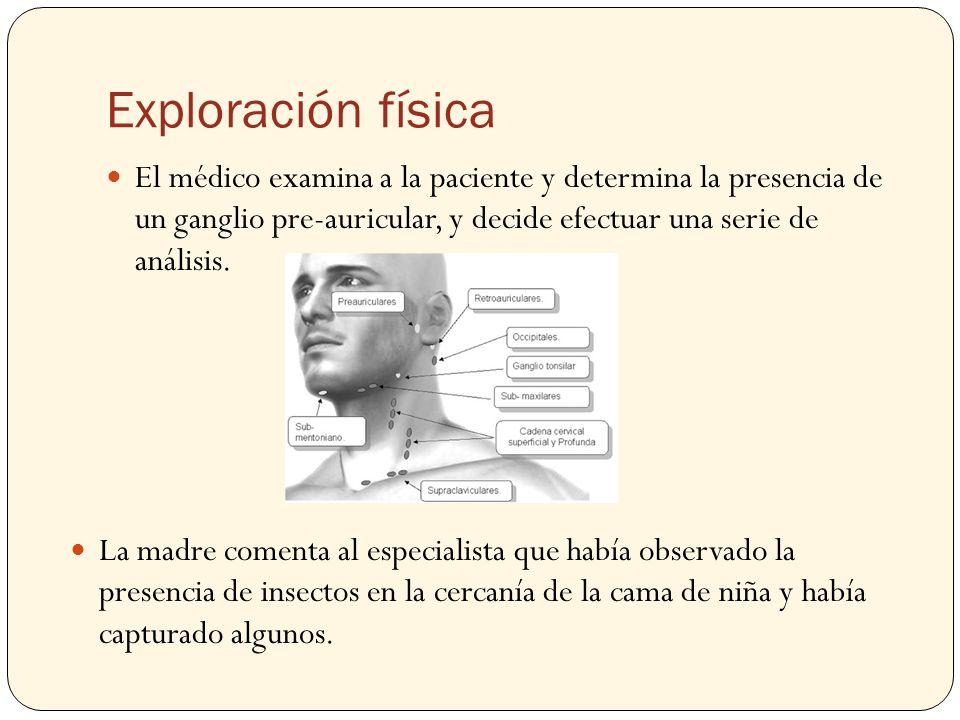 Exploración física El médico examina a la paciente y determina la presencia de un ganglio pre-auricular, y decide efectuar una serie de análisis.