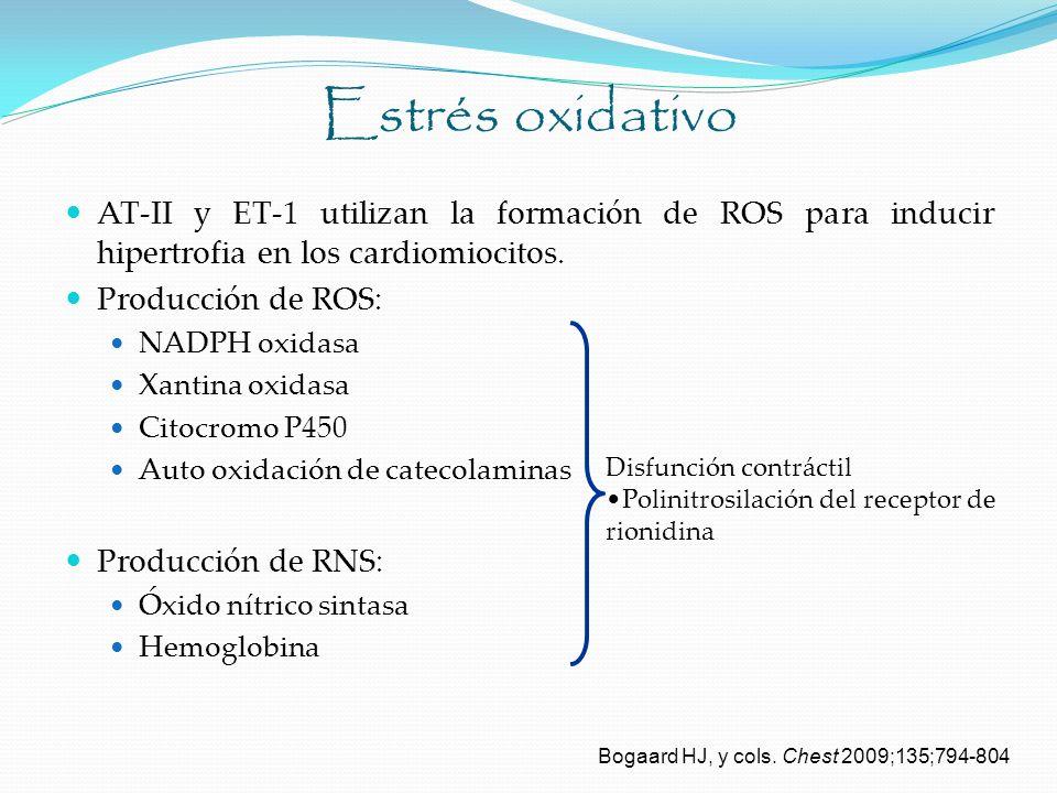 Estrés oxidativo AT-II y ET-1 utilizan la formación de ROS para inducir hipertrofia en los cardiomiocitos.