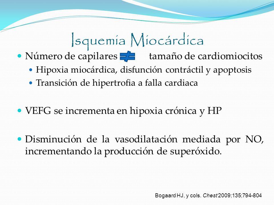 Isquemia Miocárdica Número de capilares tamaño de cardiomiocitos