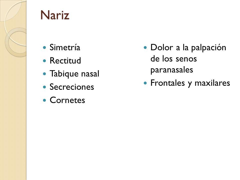 Nariz Simetría Rectitud Tabique nasal Secreciones Cornetes