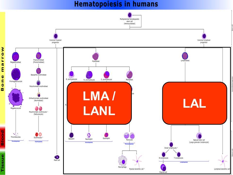 LMA / LANL LAL 45