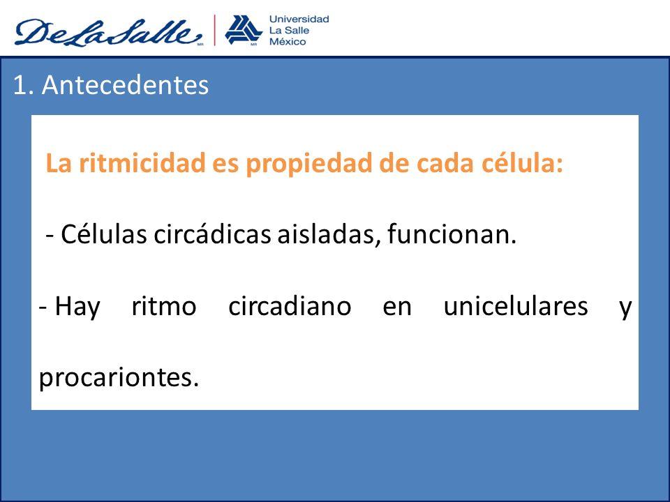1. Antecedentes La ritmicidad es propiedad de cada célula: - Células circádicas aisladas, funcionan.
