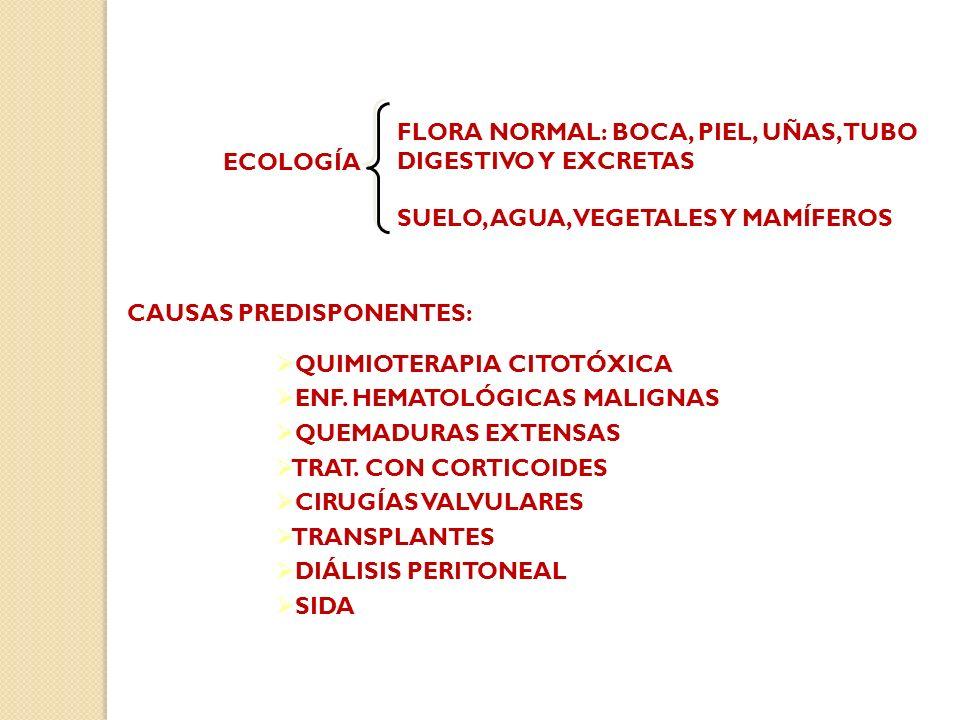 FLORA NORMAL: BOCA, PIEL, UÑAS, TUBO