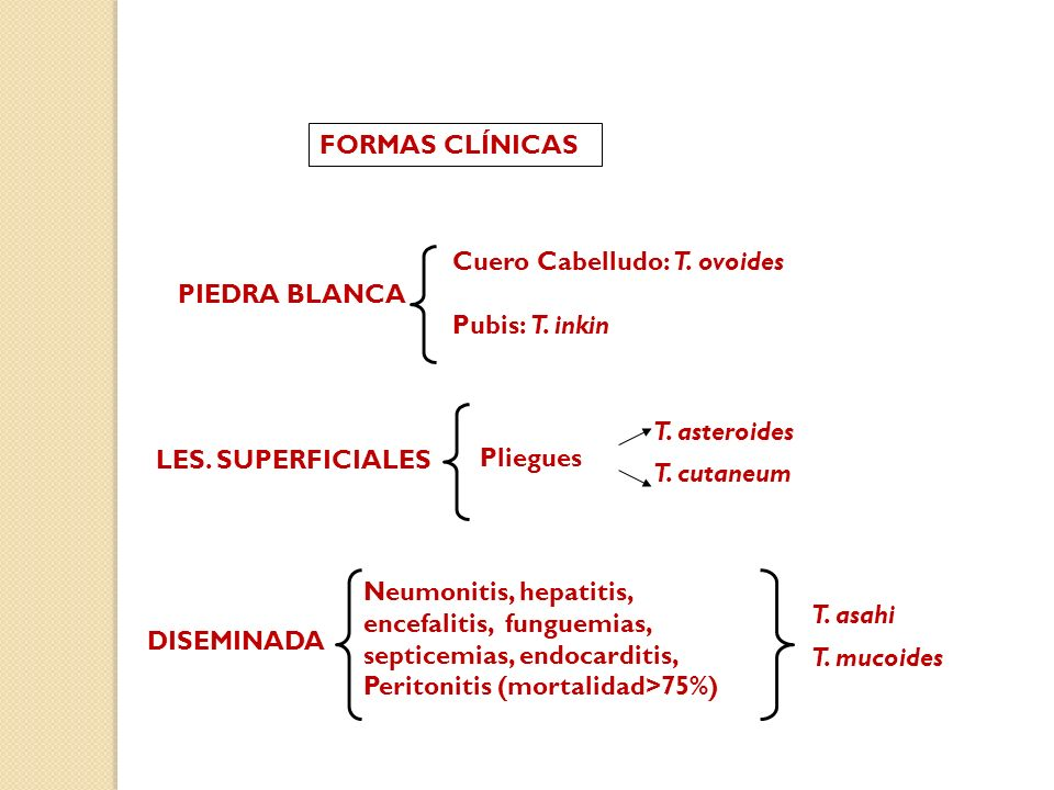 FORMAS CLÍNICAS Cuero Cabelludo: T. ovoides. Pubis: T. inkin. PIEDRA BLANCA. T. asteroides. T. cutaneum.