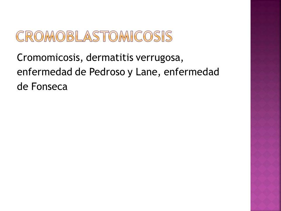 Cromoblastomicosis Cromomicosis, dermatitis verrugosa, enfermedad de Pedroso y Lane, enfermedad de Fonseca