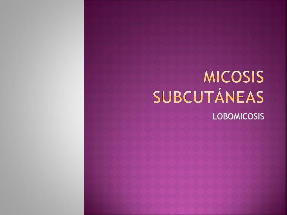 Micosis subcutáneas LOBOMICOSIS