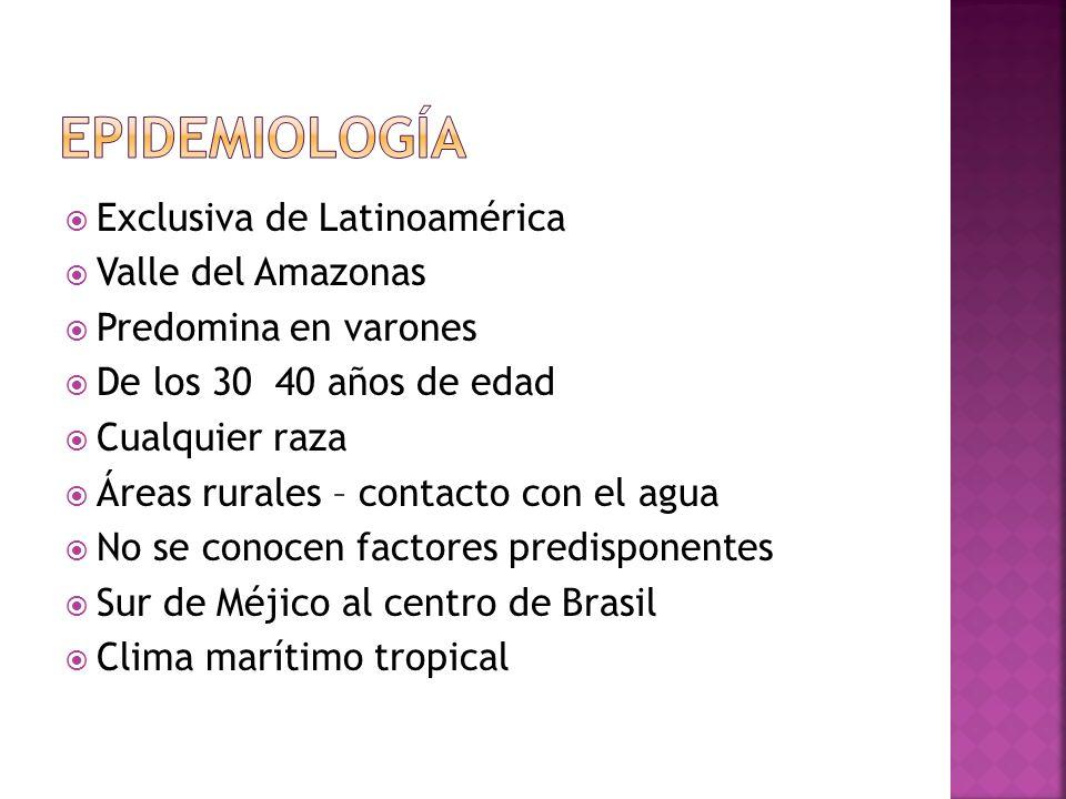 EPIDEMIOLOGÍA Exclusiva de Latinoamérica Valle del Amazonas