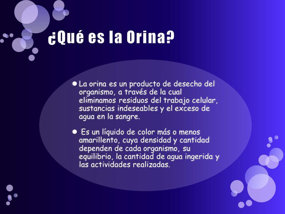 ¿Qué es la Orina