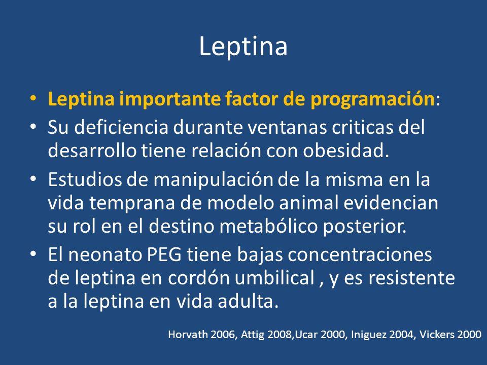 Leptina Leptina importante factor de programación: