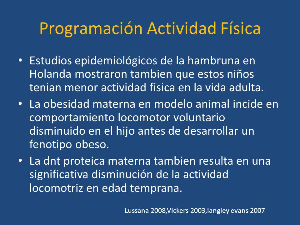 Programación Actividad Física
