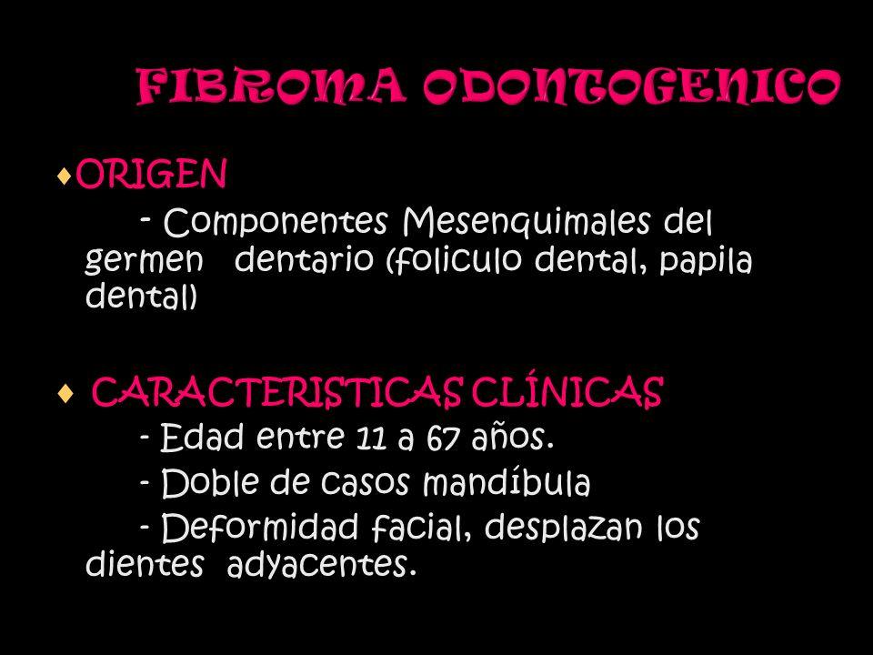 FIBROMA ODONTOGENICO ORIGEN. - Componentes Mesenquimales del germen dentario (foliculo dental, papila dental)